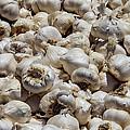 Garlic Harvest by Garry Gay