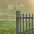 Gate In Morning Fog by Olivier Le Queinec