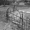 Gated Community In Black And White by Suzanne Gaff