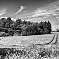Gathering The Crop To Thaxted Mill by Jack Torcello