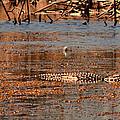 Gator Bait by Jody Lane