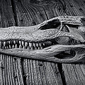 Gator Black And White by Garry Gay