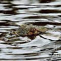 Gator Eyes by William Bosley