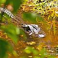 Gator On The Move by Stephen Whalen