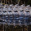 Gator Reflection by Adam Pender
