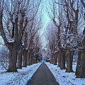 Gauntlet Of Trees To Hohenheim Castle by Jeff at JSJ Photography