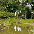 Gazebo Trees Lake And Rock Garden In Singapore Chinese Gardens by Imran Ahmed