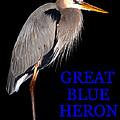 Gbh Bird Educational Work A by David Lee Thompson