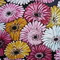 Gebera Daisies by Karin  Dawn Kelshall- Best