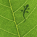 Gecko by Aged Pixel