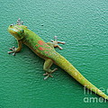 Gecko Crossing by Adrienne Franklin
