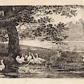 Geese At Water, Elias Stark by Elias Stark