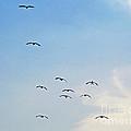 Geese Flying by Karen Adams