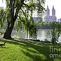 Geese In Central Park Nyc by Madeline Ellis