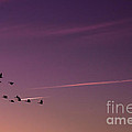 Geese In Formation by Scott Hervieux