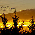 Geese In Golden Sunset by Shelly Gunderson