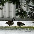 Geese In Snow by Kathy Barney