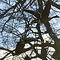 Geese In Twlight Sky by Vernis Maxwell