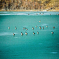 Geese On Ice by Karen Saunders