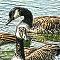 Geese On The Pond II by Lesa Fine