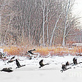 Geese Over Maumee River by Jack Schultz