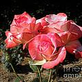 Gemini Tea Rose by Kaye Menner