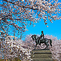 General In The Cherry Blossoms by Alice Gipson