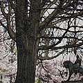 General Meade In The Cherry Blossoms by Alice Gipson