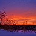 Genesis Dawn by Bill Pevlor