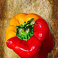 Genetically Modified Capsicum by Kaye Menner