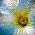 Gentle Dawn by Jim DeLillo