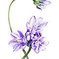 Gentle Purple Flowers by Irina Sztukowski