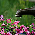 Gentle Rain - Old Water Pump - Pink Petunias - Casper Wyoming by Diane Mintle