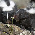 Gentle by Wildlife Fine Art