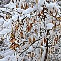 Gentle Snow Fall by Debbie Prediger
