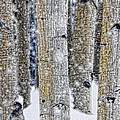 Gently Falling Forest Snow by Don Schwartz