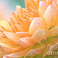 Gently Textured Dahlia  by Femina Photo Art By Maggie