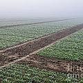 Geometry In Agriculture by Hannes Cmarits