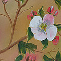 Georgia Flowers - Apple Blossoms- Stretched by Jan Dappen