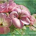 Geranium Blossoms Photoart by Debbie Portwood