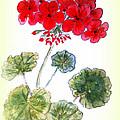 Geranium by Donna Walsh