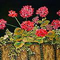 Geraniums by Genie Morgan