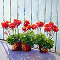 Geraniums On My Balcony by Toni Ciantar-Poole