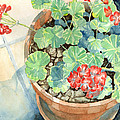 Geraniums by Pauline Walsh Jacobson