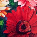 Gerber Daisies In Bloom by Nancy Hanrath