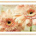 Gerber Daisy 2 by Andee Design