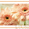 Gerber Daisy Dream 2 by Andee Design
