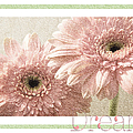 Gerber Daisy Dream 3 by Andee Design