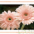 Gerber Daisy Dream 5 by Andee Design