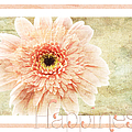 Gerber Daisy Happiness 1 by Andee Design